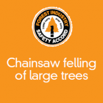 Chainsaw felling of large trees - 307