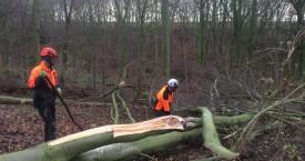 Delimbing a Tree