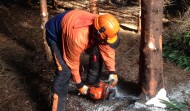 Felling & Processing Trees up to 380mm Course