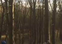 Video: Rolling out a hung up tree
