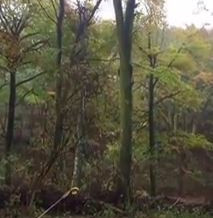 Video: Stubborn hung up tree!