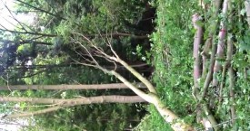 Video: Winching a hung up tree